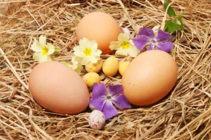 Frühling und Ostern stehen vor der Tür! Genießen Sie unsere Ostermenüs und unseren Osterbrunch!