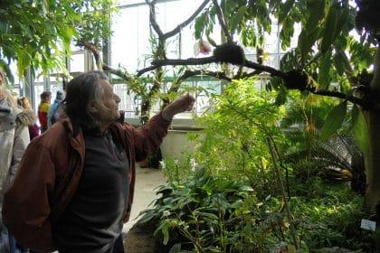 Besuch bei den Schmetterlingen im Botanischen Garten