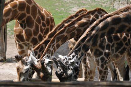 """Bravoo, Bravoo… Wir gehen in den Zoo"""