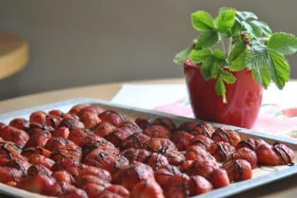 Rot und lecker – Erdbeertag