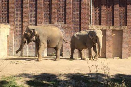 Der letzte Zoobesuch im Jahr 2017