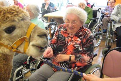 Rückblick auf den Sommer im CURA Seniorencentrum Stollberg