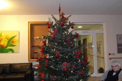 Unser langersehnte Weihnachtsbaum