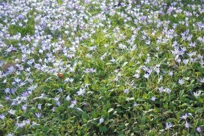 Pflanze-eine-Blume-Tag im Maximilianstift