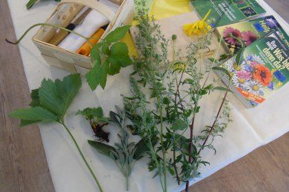 Wildkräutervortrag und Kräuterpastenherstellung