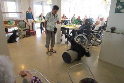 """""""Auf den Hund gekommen"""" – Hundeshow und Cocktailparty im Maternus Seniorencentrum Bonifatius"""