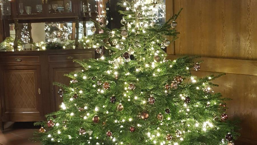 Weihnachtsbaum Brauchtum.Am Weihnachtsbaum Die Lichter Brennen Maternus Pflege Und