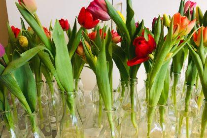 Tulpen aus Amsterdam zum Frauentag