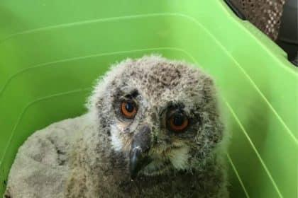 Seltener tierischer Besuch in Ahrensbök