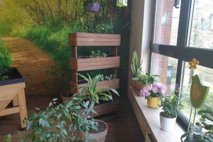 Unser Blumenzimmer – ein Ort der Entspannung und Natur erleben