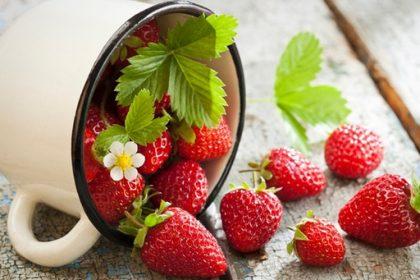 Alles dreht sich um die Erdbeere- Erdbeerfest im Salze-Stift