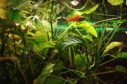 Zu gucken gibt´s immer etwas… das hauseigene Aquarium