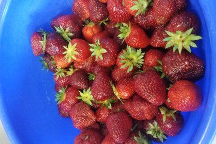Erdbeerfest im CURA Seniorencentrum Bergedorf