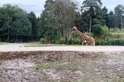 Ausflug in den Serengetipark