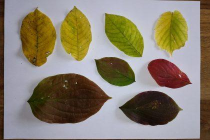 Die Tage werden wieder kürzer… der Herbst nimmt Einzug… Teil 2