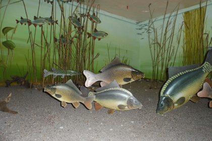 Eintauchen in die Leipziger Fischwelt