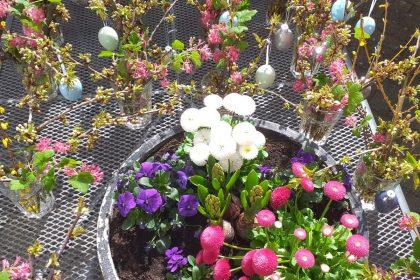 Frische Blumen aus dem Hauseigenen Garten