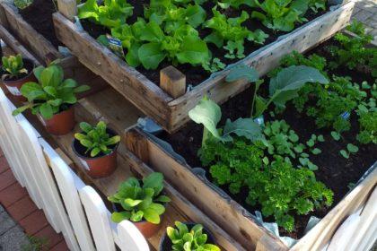 Unser Traum vom Garten…
