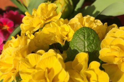 Frühlingsanfang in der Cura in Borgstedt