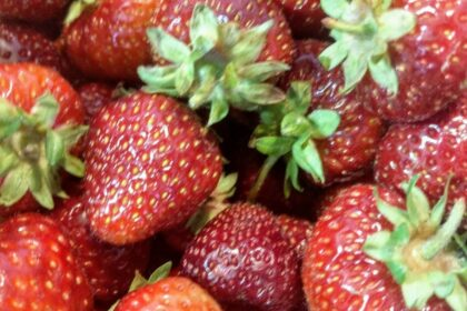 Erdbeerfest in der Cura in Borgstedt